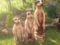 SD Provan - Meerkats