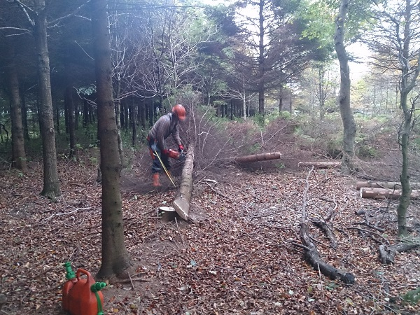 SD Provan-Foresty Thinning at Elie Estate