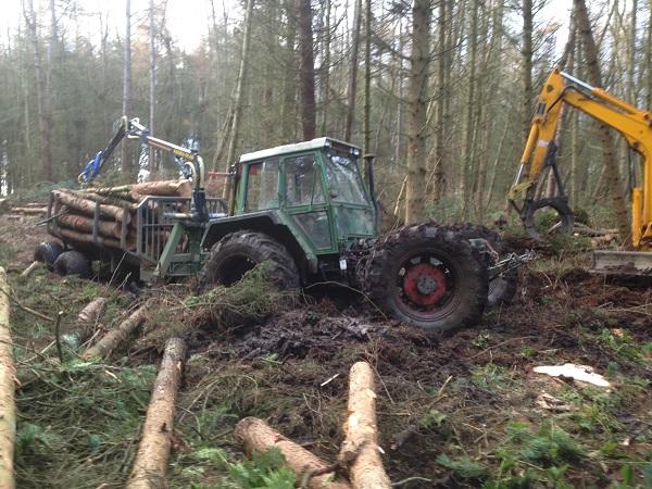 SD Provan - Bogged in Hamilton Wood