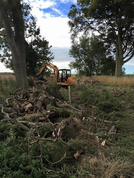 SD Provan Clearing Dead Elm Trees on Balcaskie Estate 2