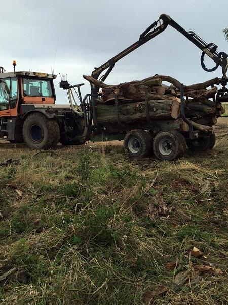 SD Provan Clearing Dead Elm Trees on Balcaskie Estate 3