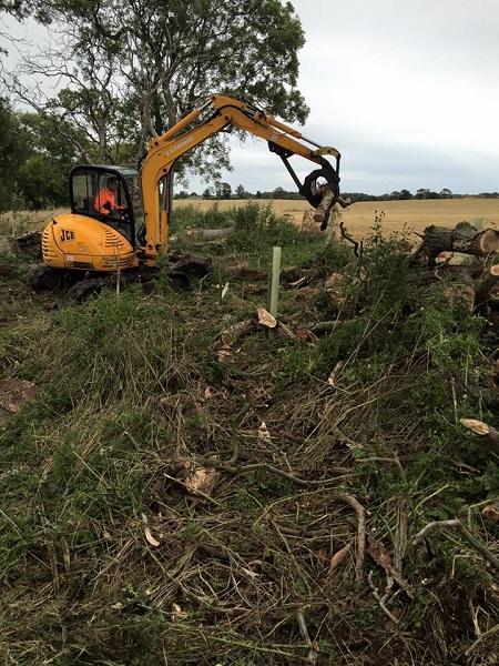 SD Provan Clearing Dead Elm Trees on Balcaskie Estate 4
