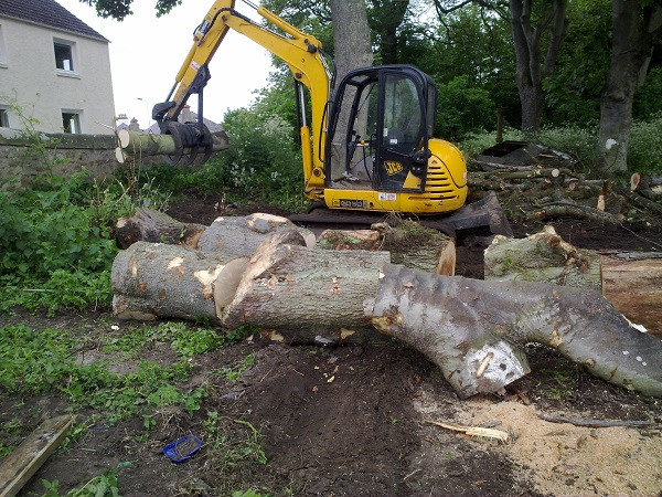 SD Provan - Clearing timber in Elie