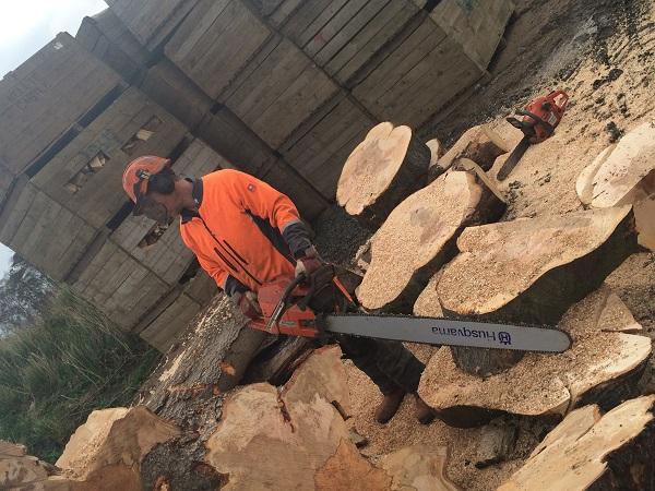 SD Provan - Cutting Beech Tree