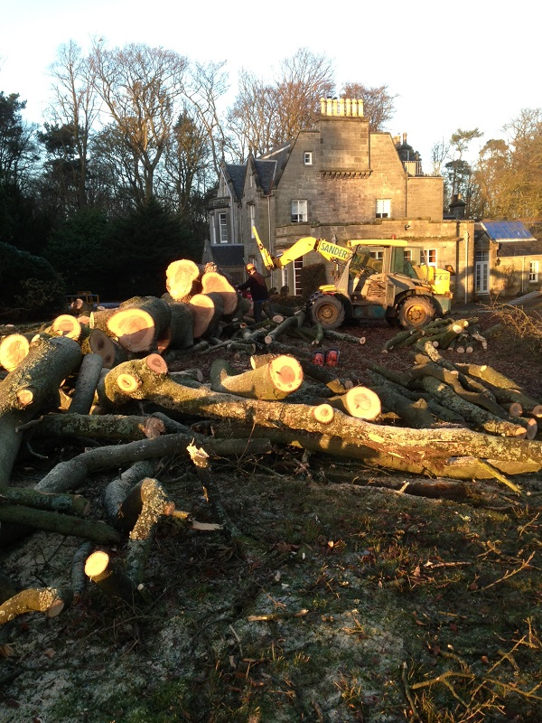 SD Provan - Large tree removal on country estate