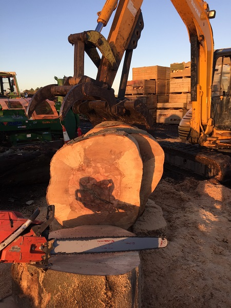 SD Provan Log Cutting 2