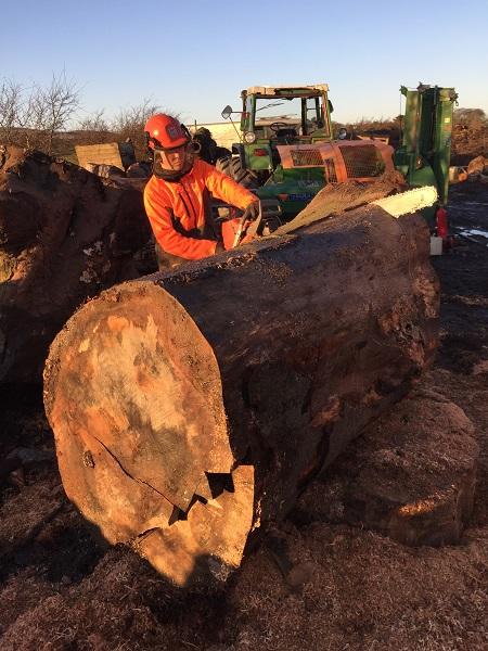 SD Provan Log Cutting 3