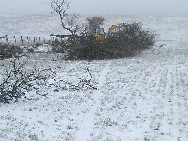 SD Provan - Remove hedge at N. Baldutho