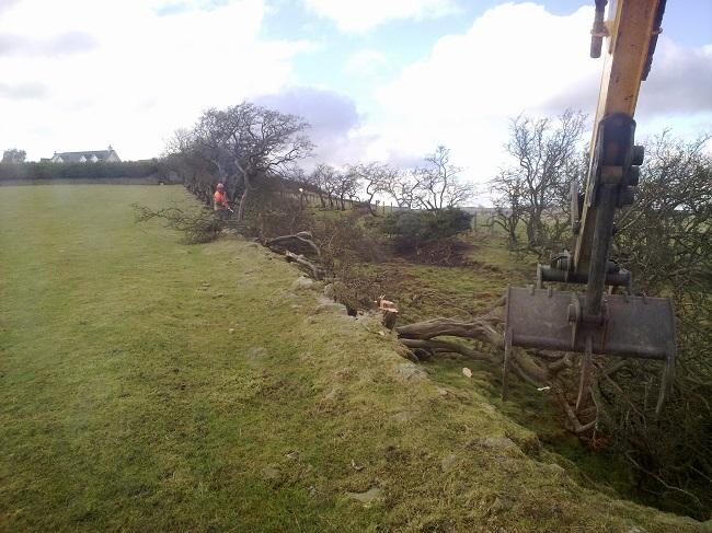 SD Provan - Removing old hedging on N. Baldutho