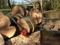 SD Provan - Converting Fallen Beech Tree into Firewood