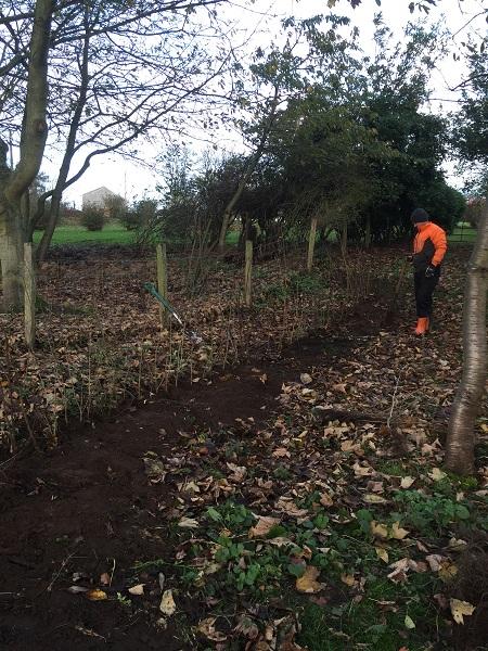 SD Provan Hedge Planting 1