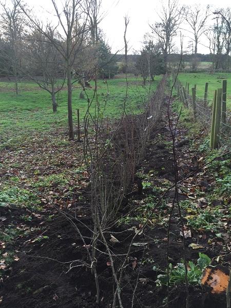 SD Provan Hedge Planting 2