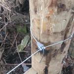 SD Provan - Fencing